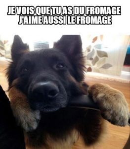 chien-fromage-image-drole