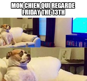 image-drole-chien-friday-13