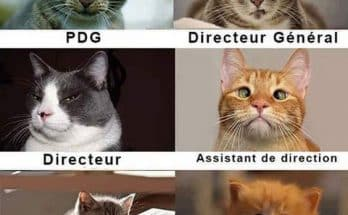 chat-insdustries-image-drole
