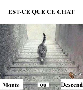 Ce chat monte ou descend ?