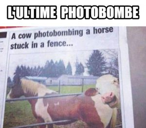 L'Ultime Photobombe…