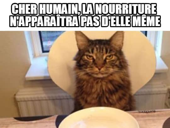 cher-humain-image-drole