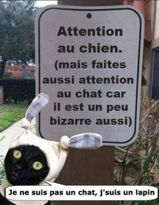Attention chat bizzare…