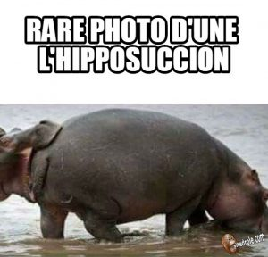 l'hipposuccion…