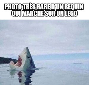 Photo rare d'un requin…