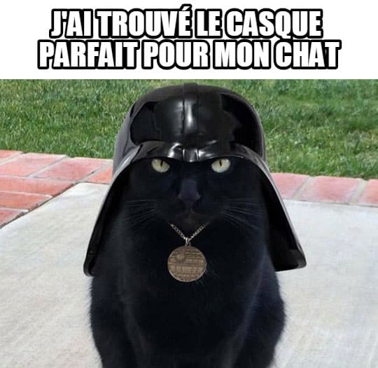 casque-chat-image-drole