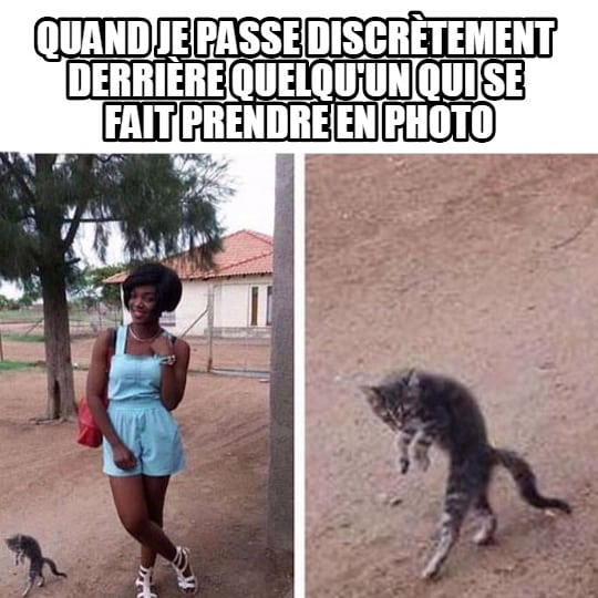 chat-photo-image-drole