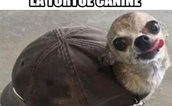 image-drole-tortue-canine