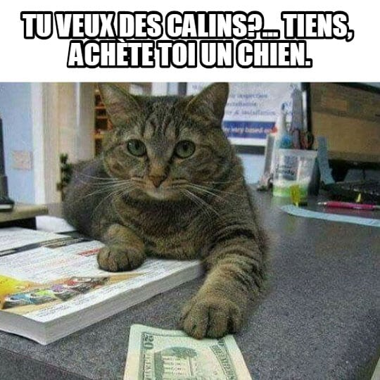 calin-image-drole