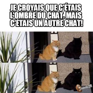 Ombre ou chat…