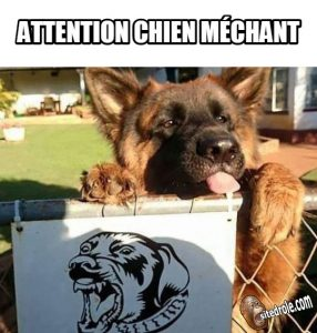 image-drole-chien-mechant