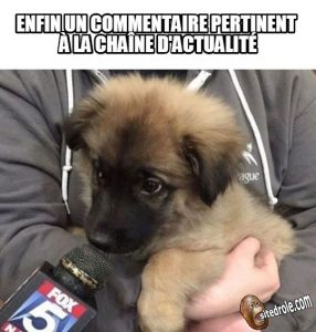image-drole-commentaire
