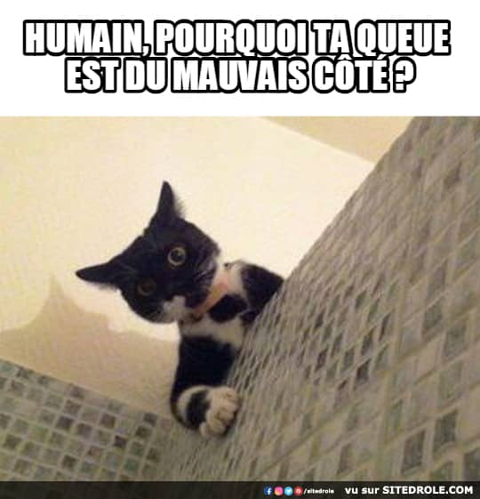 image-drole-chat-queue
