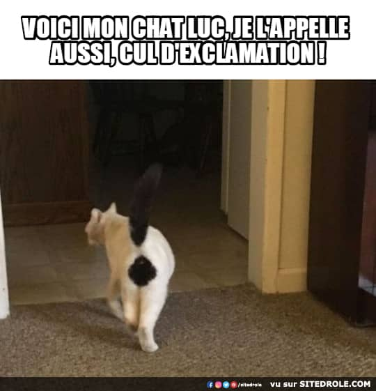image-drole-cul-exclamation