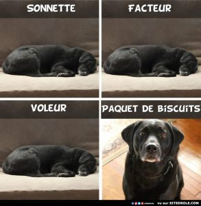 image-drole-paquet-biscuit