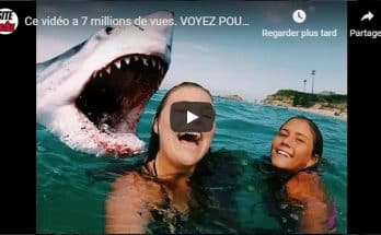 video-shark-attack